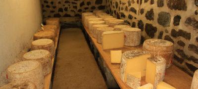 Visite de ferme fromages Cantal