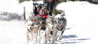 Cantal Mushing chiens de traineaux Pailherols