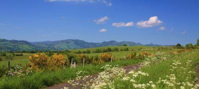 Niervèze Cantal Auvergne vue sur le volcan