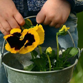 fete-des-mere-enfant-cadeau-fleurs-cantal-carlades-auvergne