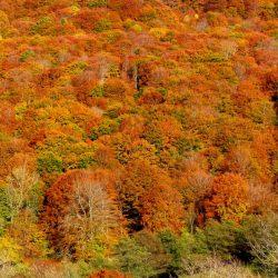 automne cantal carlades auvergne paysage
