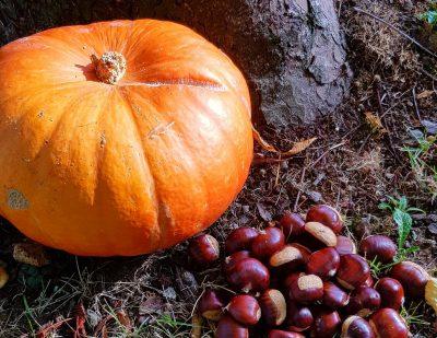 potiron-automne-gourmandise-chataigne-carlades-cantal