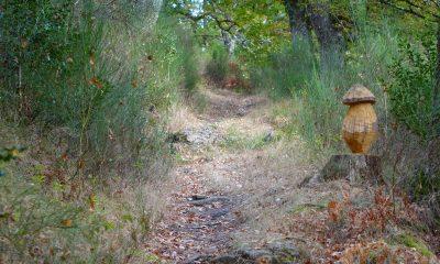 Chemin de randonnée dans le Cantal à l'automne