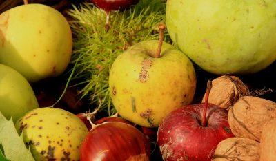 Pommes à l'automne dans le Cantal