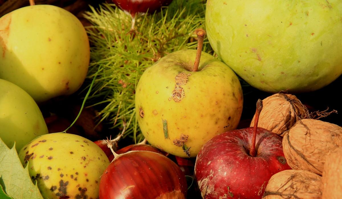pommes-automne-cantal-auvergne-noix