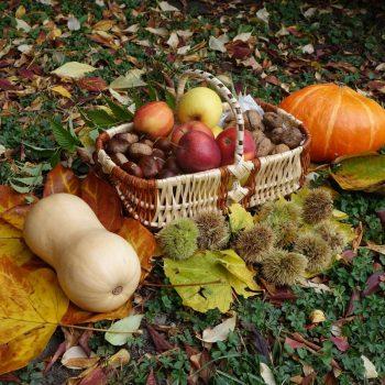 auvergne-saveurs-automne-potiron-châtaigne-noix-gastronomie-cuisine