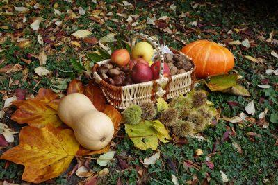 Saveurs d'automne dans le Cantal à Vic sur Cère