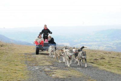 Sortie en chiens de Traîneaux à Pailherols
