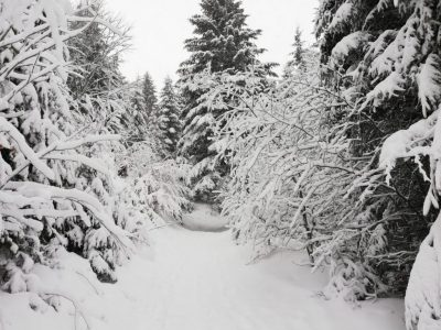 Ski de randonnée au Lioran à Font d'Alagnon dans le Cantal