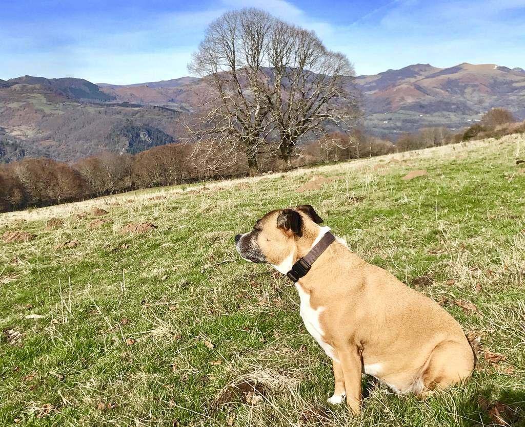 Randonnée avec un chien dans le Cantal