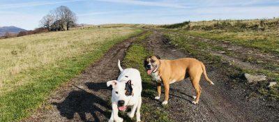 Randonnées avec un chien - Cantal