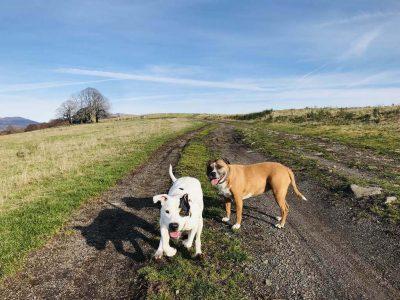 randonnée avec un chien dans le Cantal à Badailhac