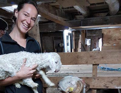 Ferme de la molède élevage de brebis dans le Cantal