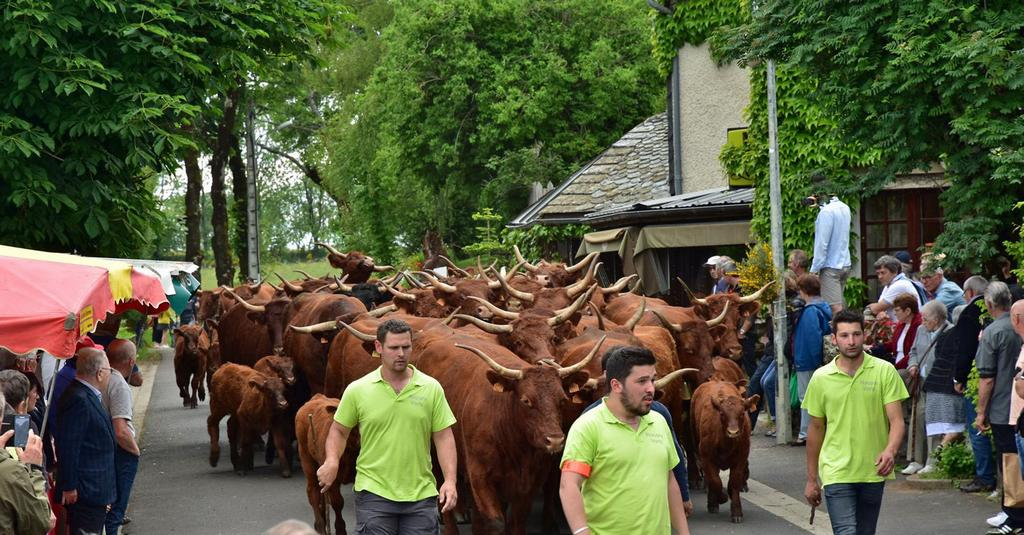 défilé des troupeaux Pailherols fête des fromages