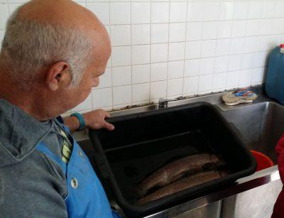pisciculture du ganel à polminhac truite fario
