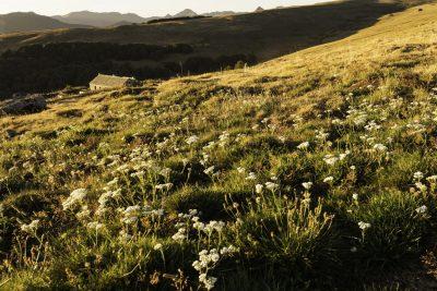 Buron de Bâne à Pailherols dans le Cantal